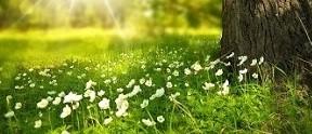 Wander-Wellness und mehr, Ihr Pfalzurlaub werden mit unseren Hirschhorn-Arrangements zum Erlebnis